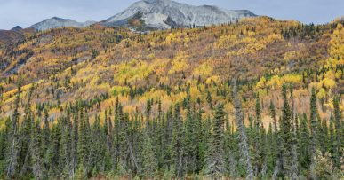 automne en alaska forets couleur